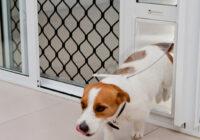 doggy door sliding door insert